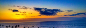 top_trees_sunset_banner